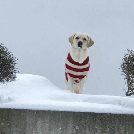 除雪の現場監督、ふくちゃん。